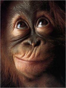 monkey_thinking