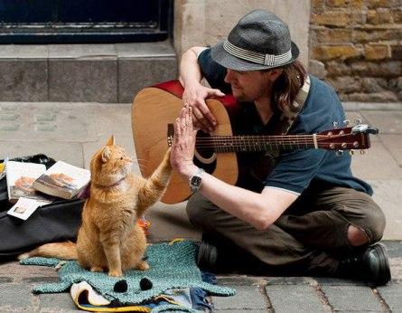 Bob-the-Street-Cat