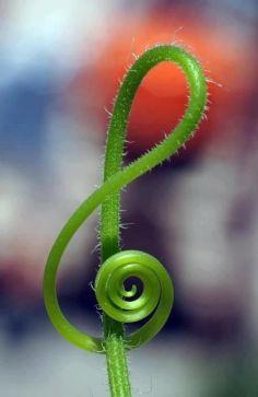 muzica plantelor